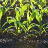 Testing Your Soil pH Without a Kit